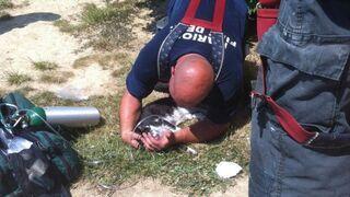 Piękna praca strażaków