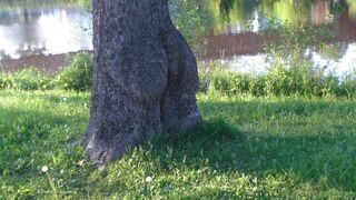Dupne drzewo