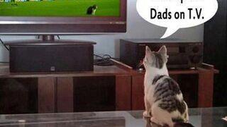 Mom qucik Dads on T.V.