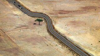 Droga przez pustynie i drzewo