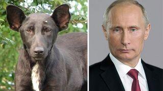 Pies/Vladimir Putin