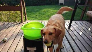 Pies i maszyna do serwowania piłek tenisowych
