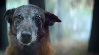 Facet porzucił psa, a chwilę później ten uratował mu życie