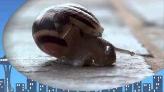 Taniec ślimaka - Reggae Slug (snail)