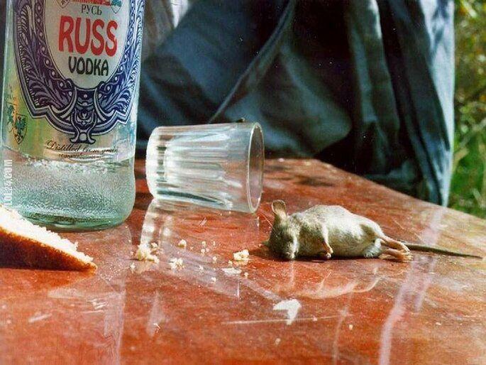 po imprezie : Mysz z Rosji