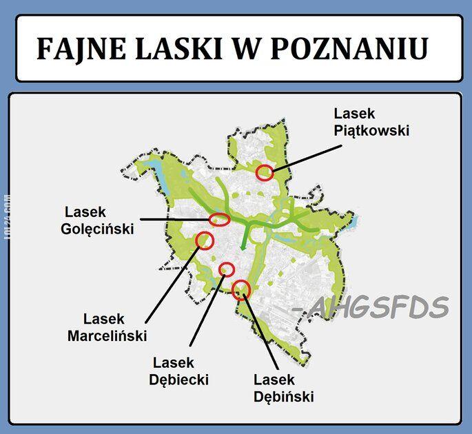 napis, reklama : Fajne laski w Poznaniu