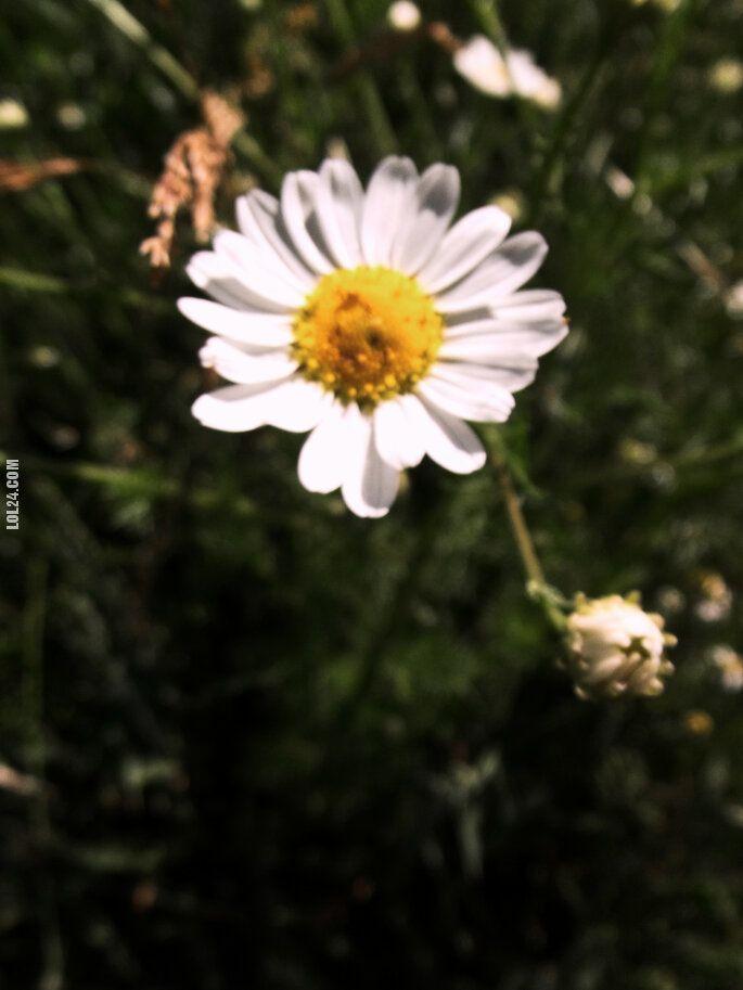 pozostała : Przyroda
