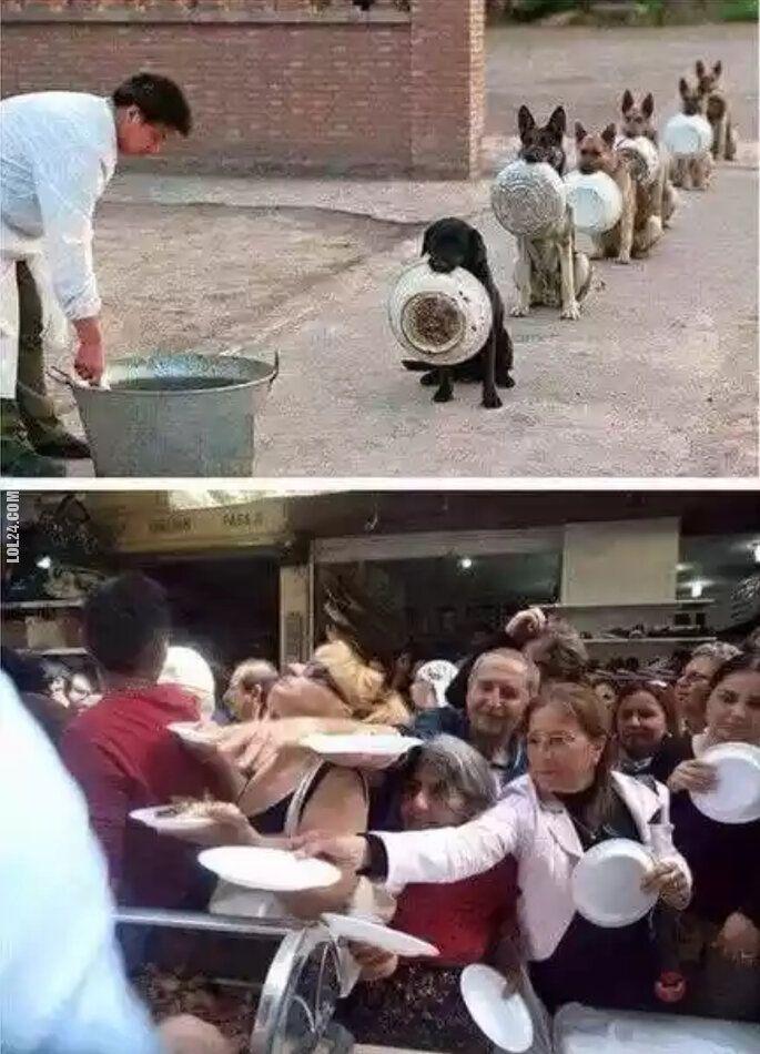 pozostała : Kultura zwierząt, a ludzi