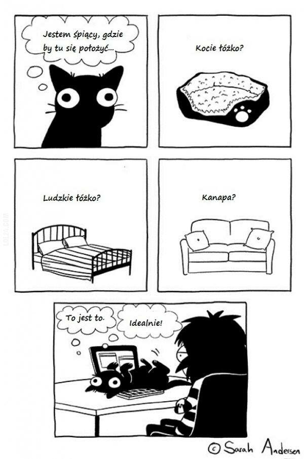 satyra : Koty tak mają