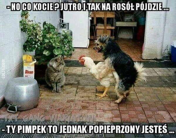 demotywator : Kot, pies i kura
