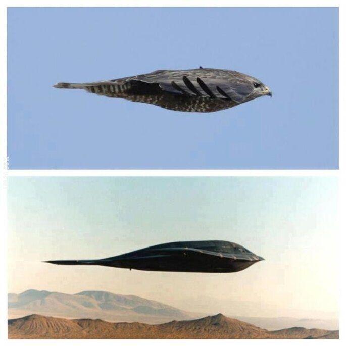 technologia : Inspiracja inżynierów bombowca B2