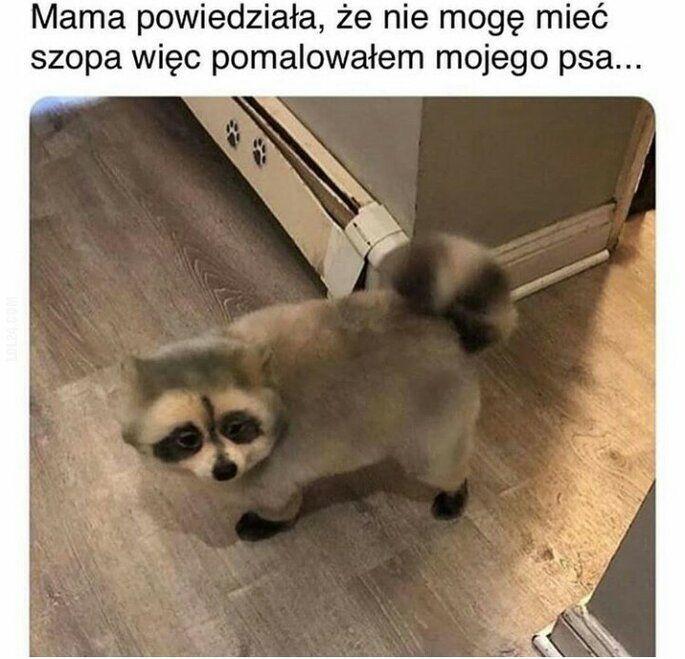 mem : Pies aka szop
