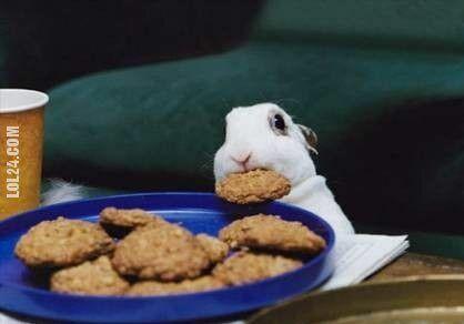 zwierzak : króliczek obiad się ciastkami