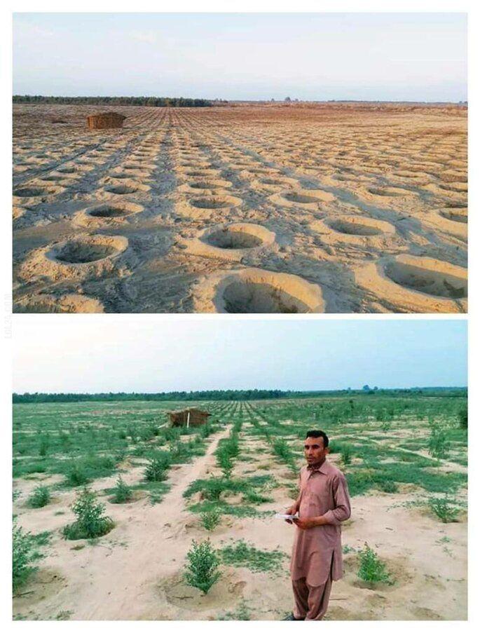 niesamowite : Plan rząd Pakistanu o posadził miliard drzew