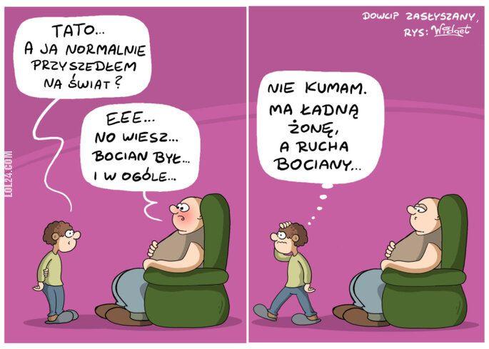 rysunek : Bocian