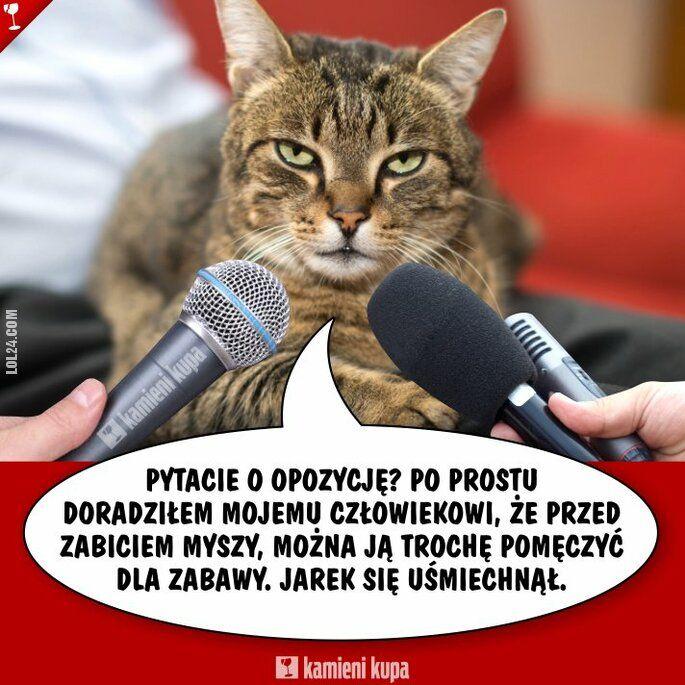 polityka : To wszystko wina kota.