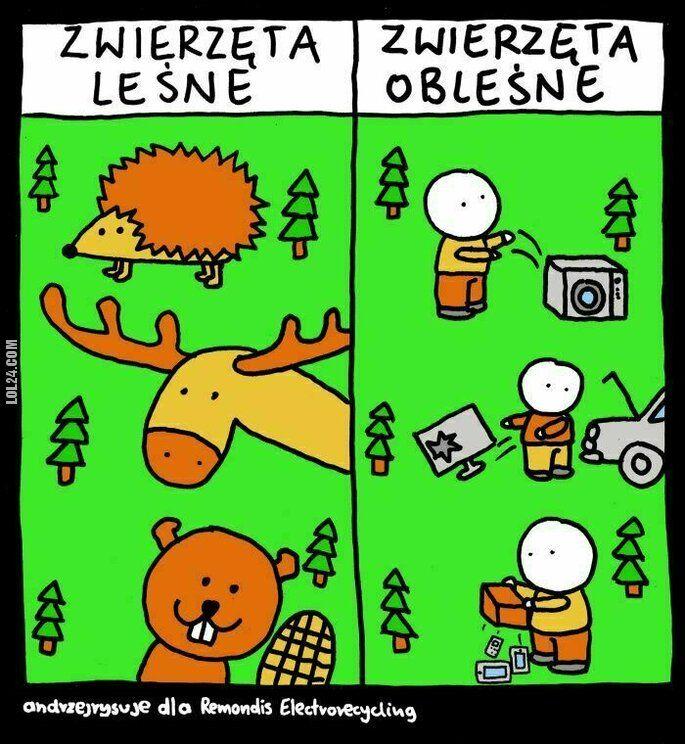 mem : Bardzo łatwo spotkać je w lesie?