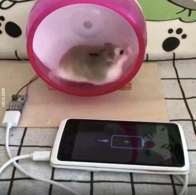 technologia : Chomik ładuje telefon