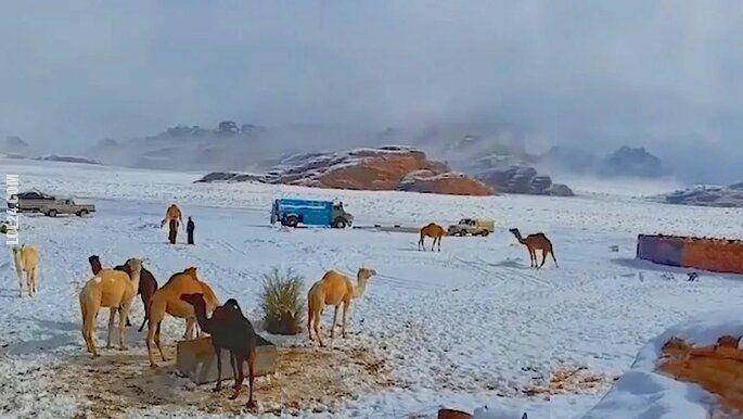 inne : Zima na pustyni.