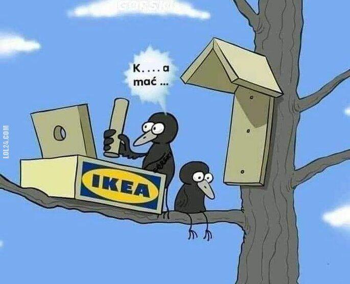 zwierzak : meble z Ikea