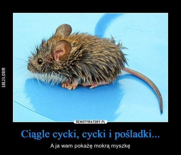 erotyka : Mokra myszka