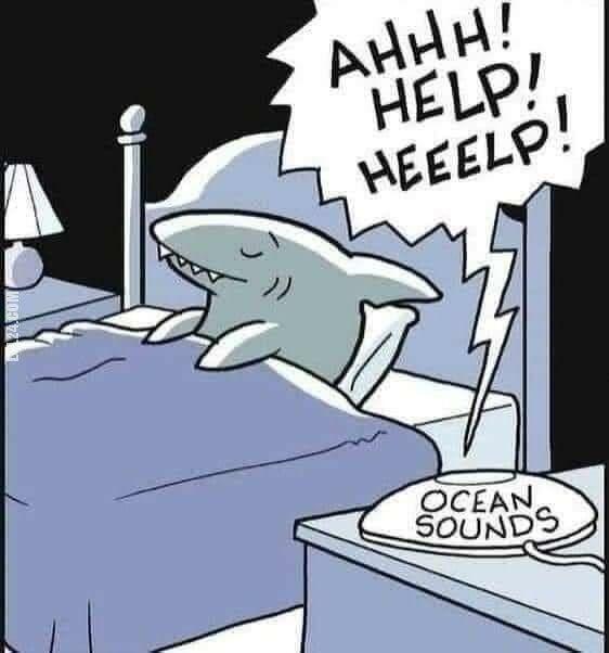 rysunek : Relaksujące ASMR dla rekinów.