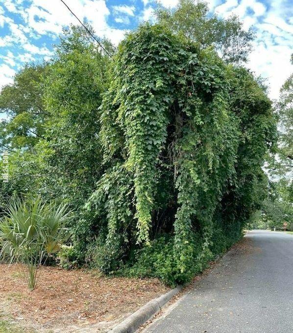 złudzenie : Drzewo-słoń