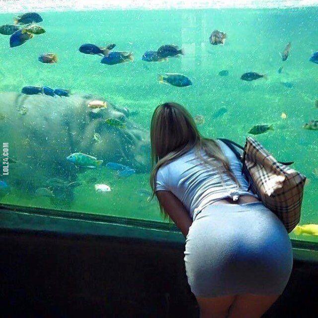 seksowna : Fajne rybki!