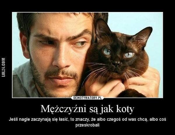 inne : Mężczyźni są jak koty