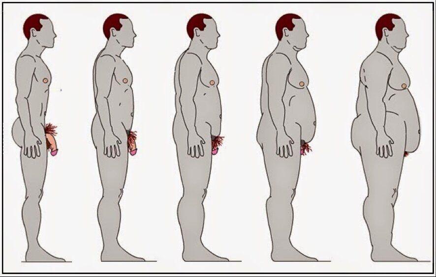 penis otyłości