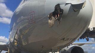 Ptak uderzył podczas lodowania w dziób samolotu - Miami International