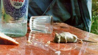 Mysz z Rosji