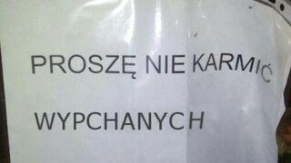 Proszę nie karmić wypchanych alpak