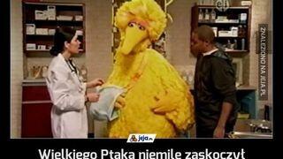 Wielki ptak z Ulicy Sezamkowej