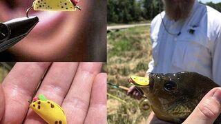 Łowienie ryb na miniaturowe taco