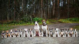 Duża rodzinka