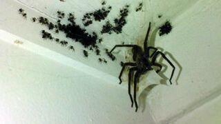 Urocza rodzinka pająków