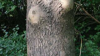 Biust matki natury