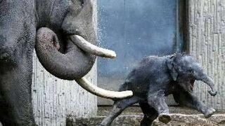 słoniątko dostało cios