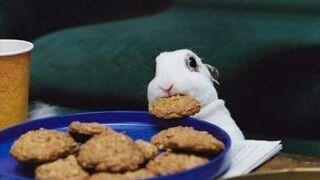 króliczek obiad się ciastkami