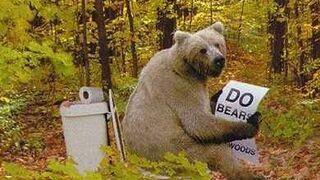 niedźwiedź w ubikacji