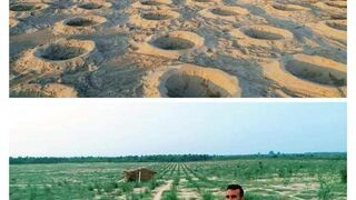 Plan rząd Pakistanu o posadził miliard drzew