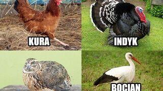 Głupie ptaki