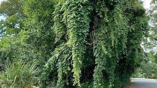 Drzewo-słoń
