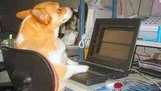pies przy laptopie