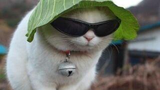 Gato - Rave