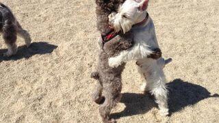 Psie przytulanie