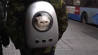Kosmiczny plecak do przewożenia kota