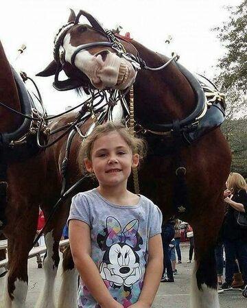Koń trolluje na drugim planie