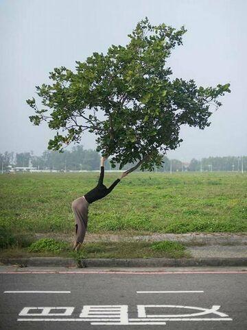 Ubrane drzewo przy drodze